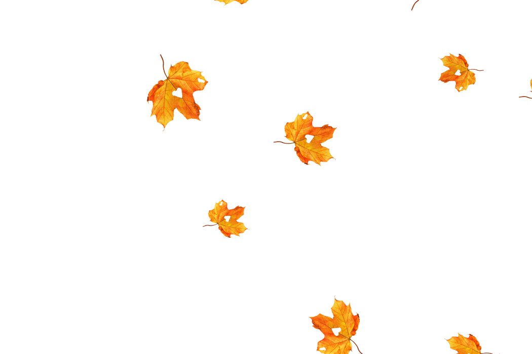 Falling leaves Photoshop Overlay   Gorgeous autumn leaves transparent background