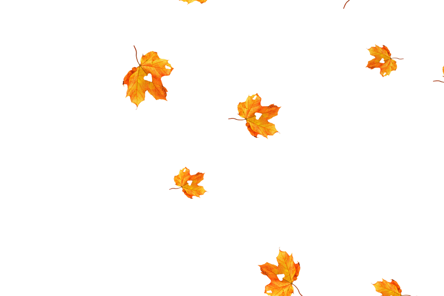 Falling leaves Photoshop Overlay | Gorgeous autumn leaves transparent background