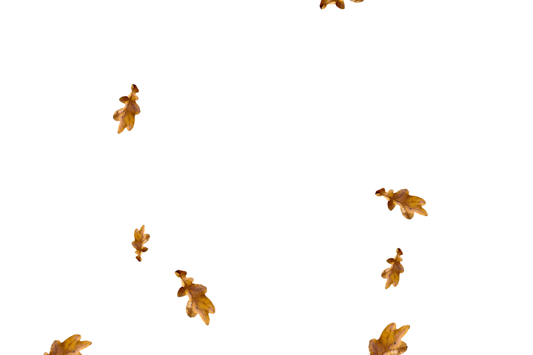 Falling leaves Photo Overlays | Stunning autumn leaves transparent background