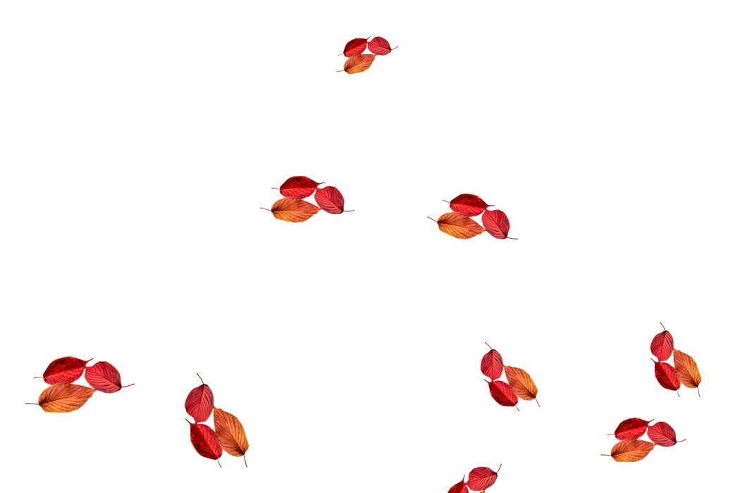 Dreamy autumn leaves transparent background | Falling leaves Photoshop Overlay