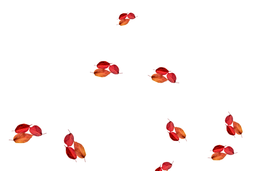 Dreamy autumn leaves transparent background   Falling leaves Photoshop Overlay