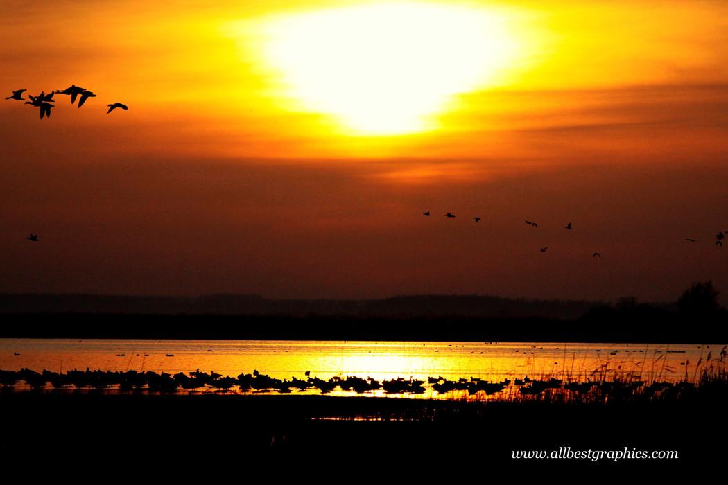Charming fluffy sunset overlay | Photo overlays