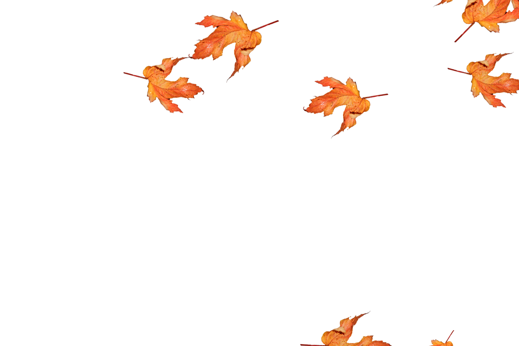 Romantic autumn leaves transparent background | Falling leaves Photoshop overlays