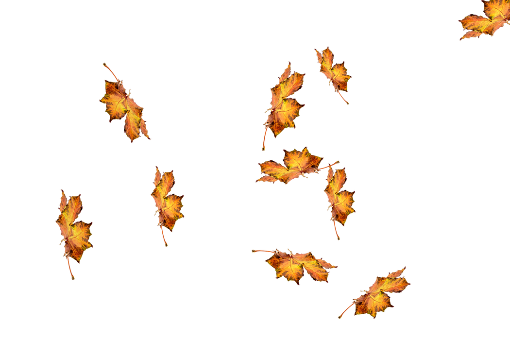 Superb autumn leaves transparent background | Falling leaves Photoshop overlays