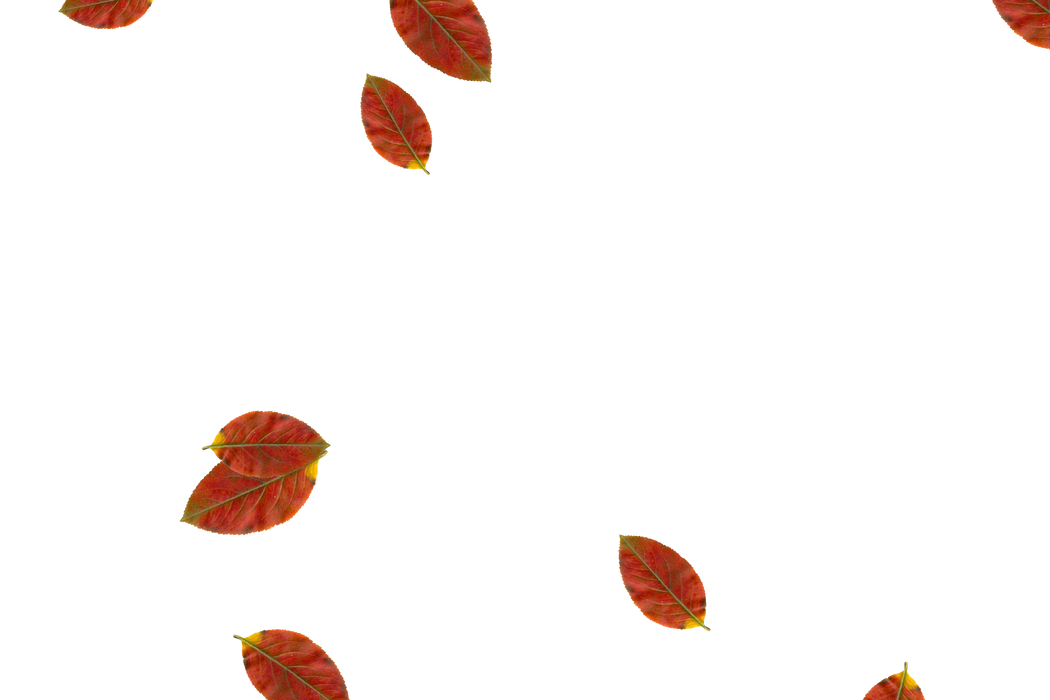 Falling leaves Overlays for Photoshop | Superb autumn leaves transparent background