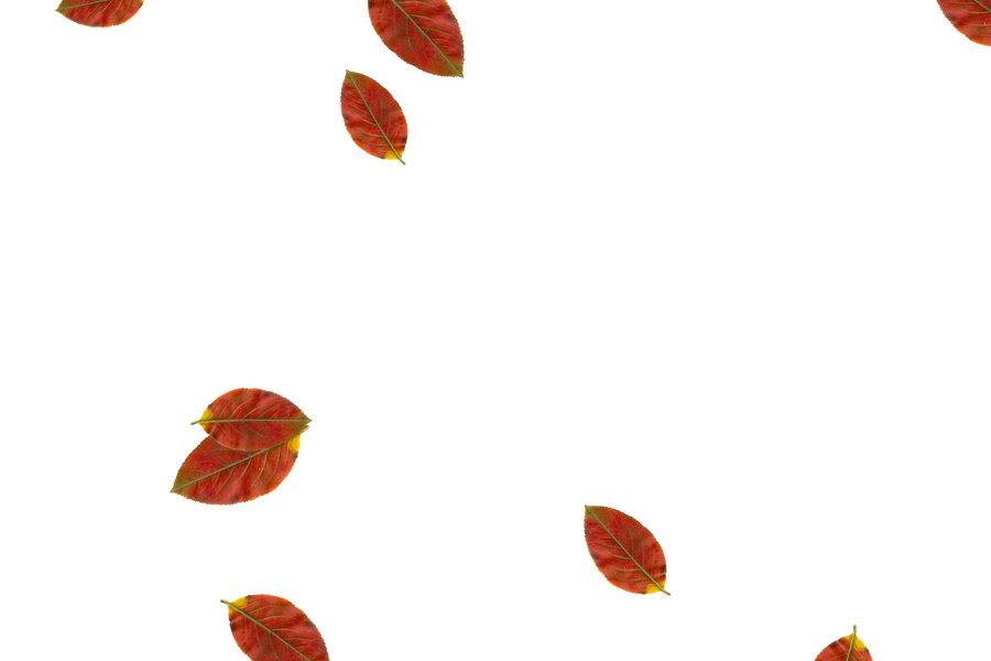 Falling leaves Overlays for Photoshop   Superb autumn leaves transparent background