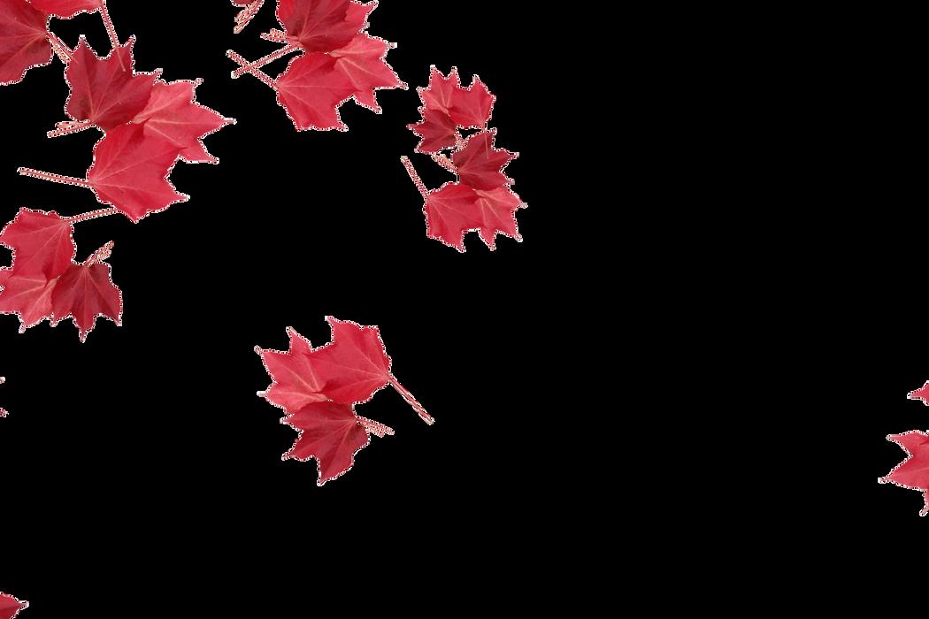 Beautiful autumn leaves transparent background | Falling leaves Photoshop overlays