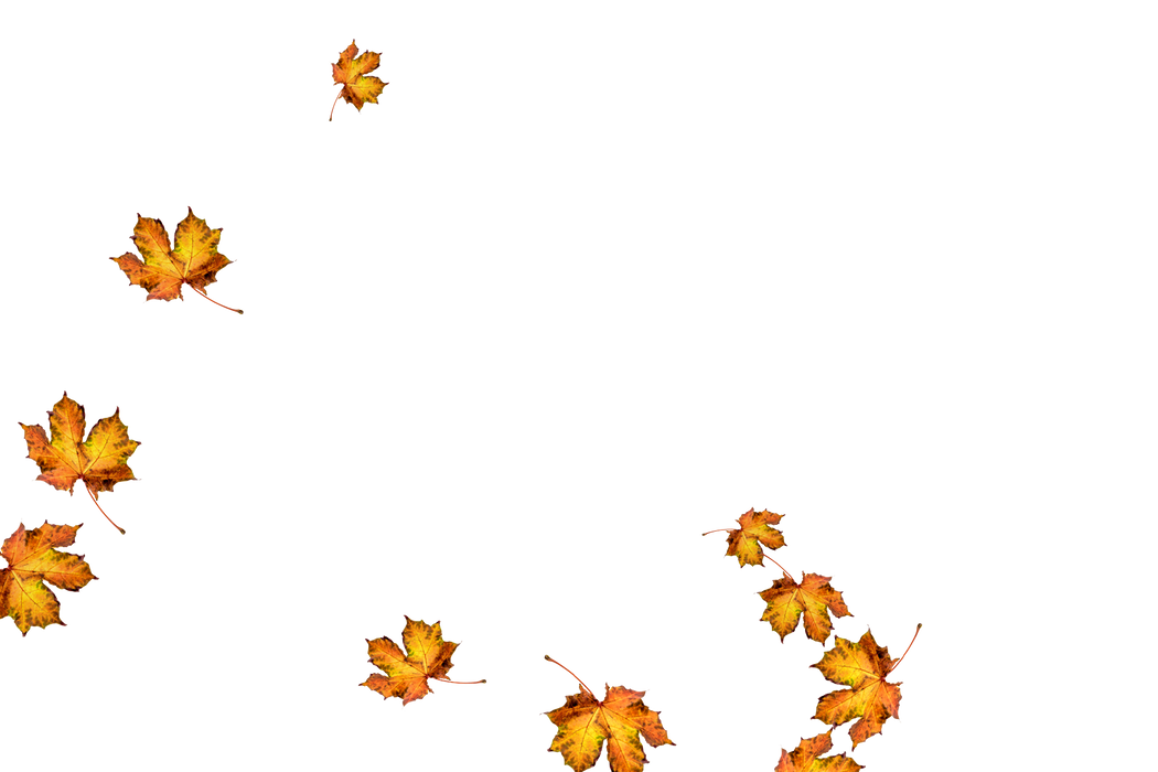 Dreamy autumn leaves transparent background | Falling leaves Overlay for Photoshop