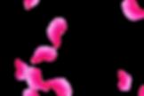 Magnificent Wedding Rose Petals | Photo Overlays | Freebies