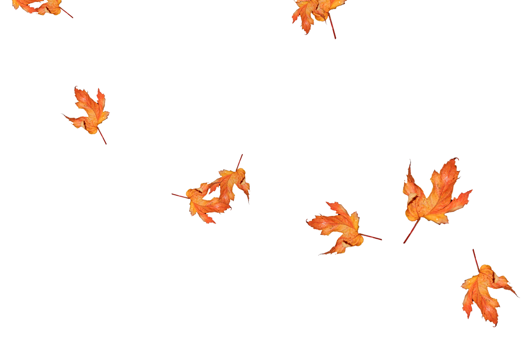 Falling leaves Photoshop Overlay | Lovely autumn leaves transparent background