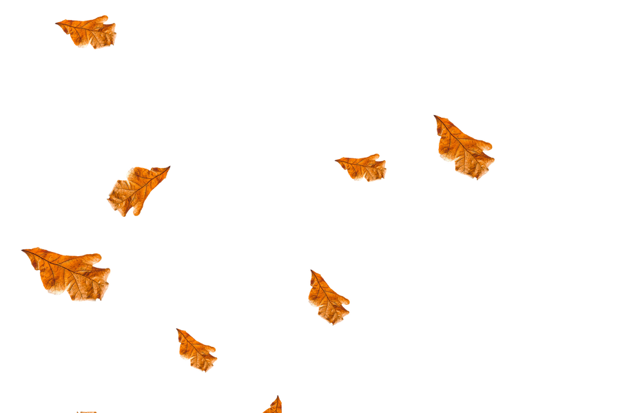 Beautiful autumn leaves transparent background | Falling leaves Photo Overlays