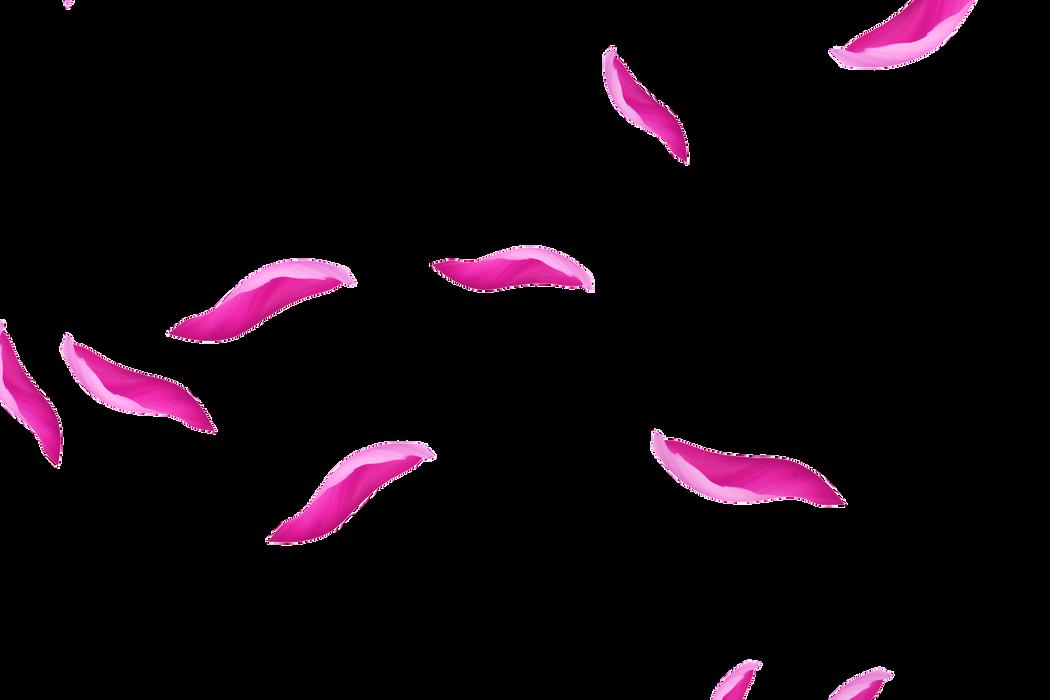 Dreamy Light Rose Petals | Photoshop Overlay | Free