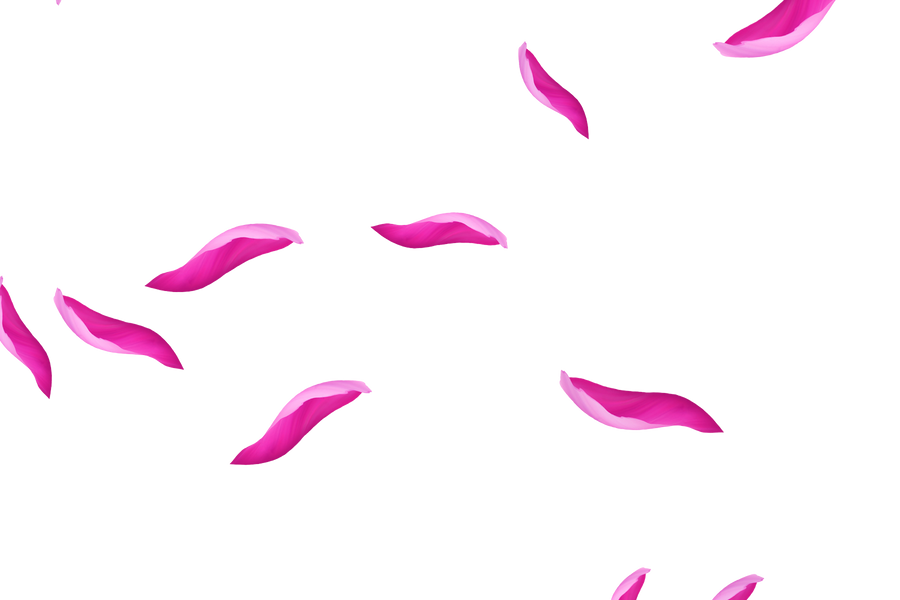 Dreamy Light Rose Petals   Photoshop Overlay   Free