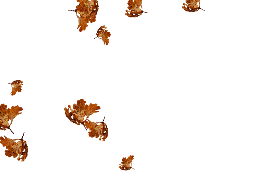 Awesome autumn leaves transparent background   Falling leaves Photo Overlay