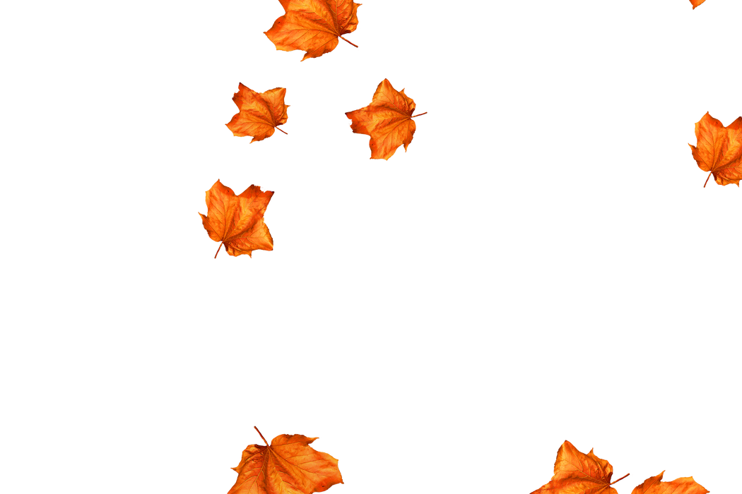Romantic autumn leaves transparent background | Falling leaves Overlay for Photoshop