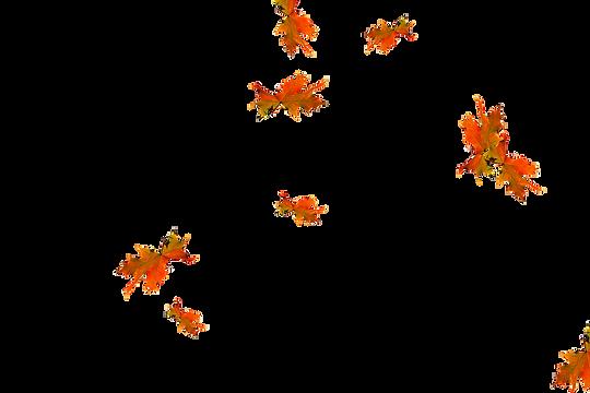 Falling leaves Photoshop Overlay | Wondrous autumn leaves transparent background