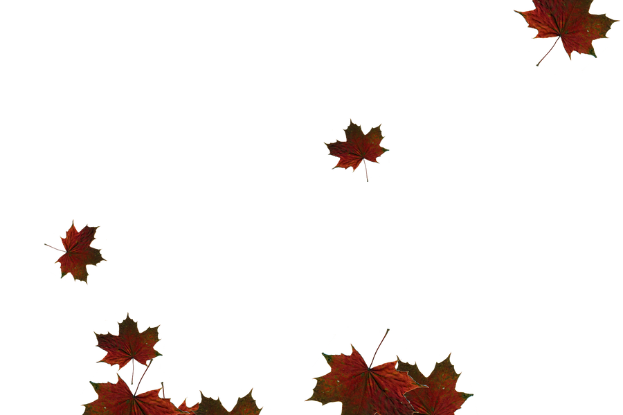 Falling leaves Photoshop Overlay   Glorious autumn leaves transparent background