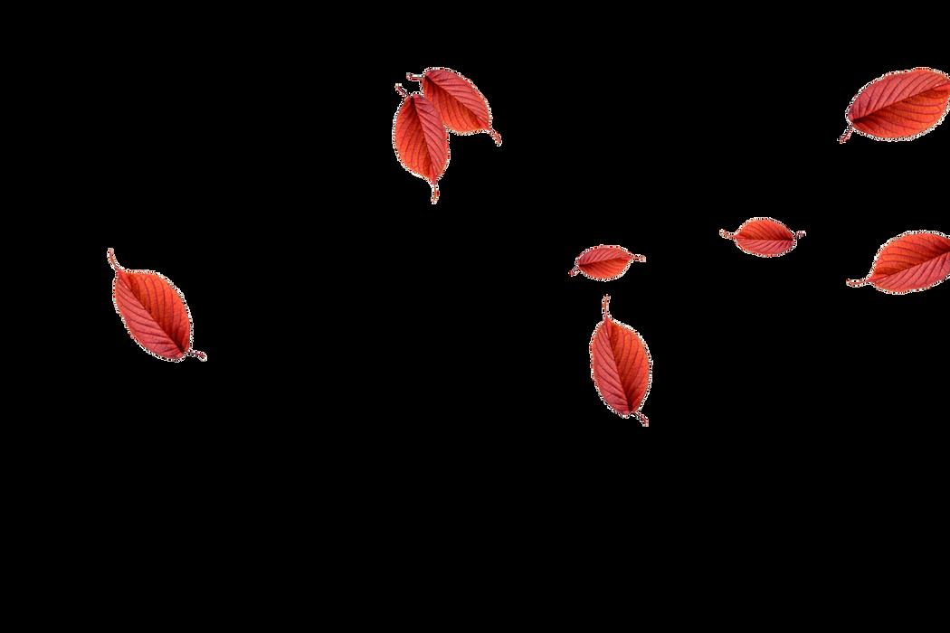 Wondrous autumn leaves transparent background | Falling leaves Photoshop overlays