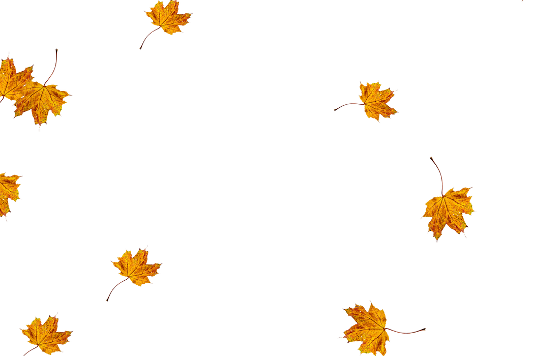 Falling leaves Photoshop overlays   Gorgeous autumn leaves transparent background
