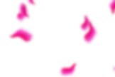 Elegant Party Rose Petals | Photo Overlays | Freebies