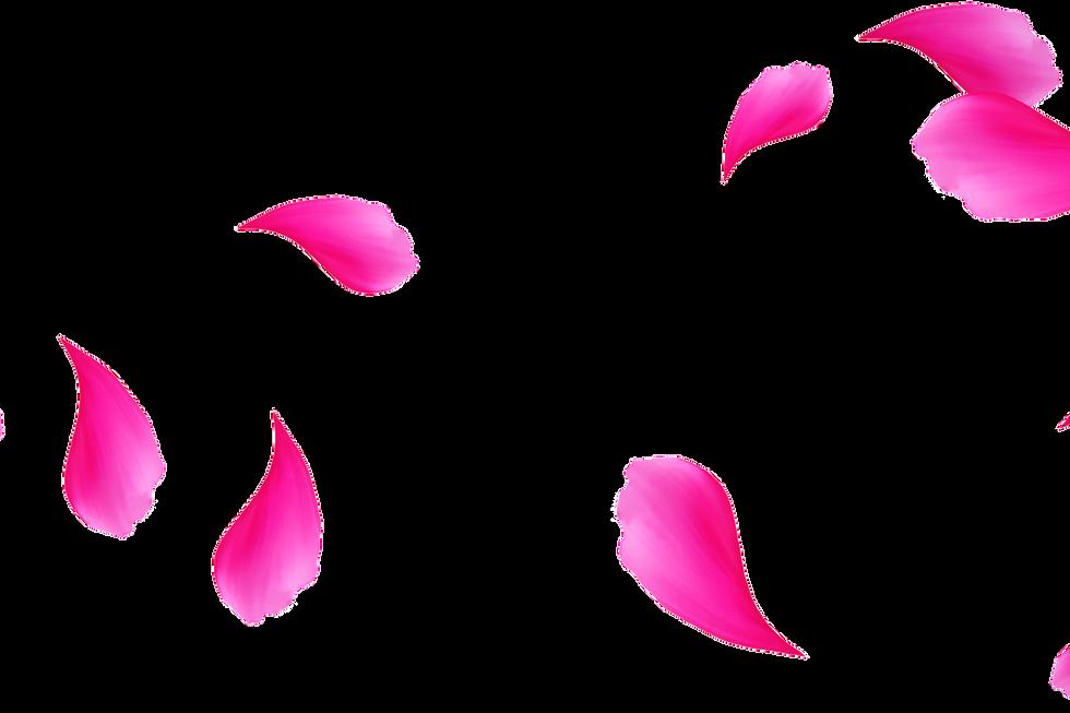 Glorious Japanese Rose Petals | Photo Overlay | Free
