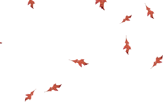 Falling leaves Photo Overlay | Glorious autumn leaves transparent background