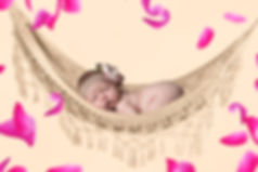 Baby Hammock Backdrop with Rose Petals | Newborn digital background
