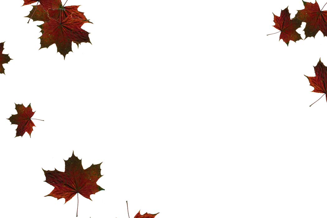 Glorious autumn leaves transparent background | Falling leaves Overlays for Photoshop