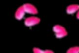 Amazing Flying Rose Petals | Photoshop Overlay | Freebies