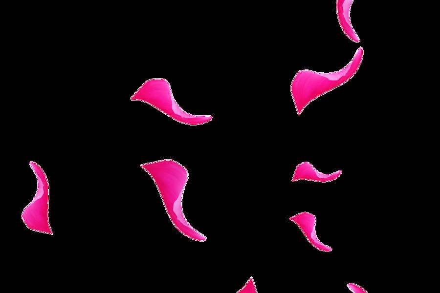 Gorgeous Pink Rose Petals   Photoshop overlays   Free