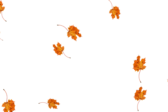 Beautiful autumn leaves transparent background | Falling leaves Photoshop Overlay