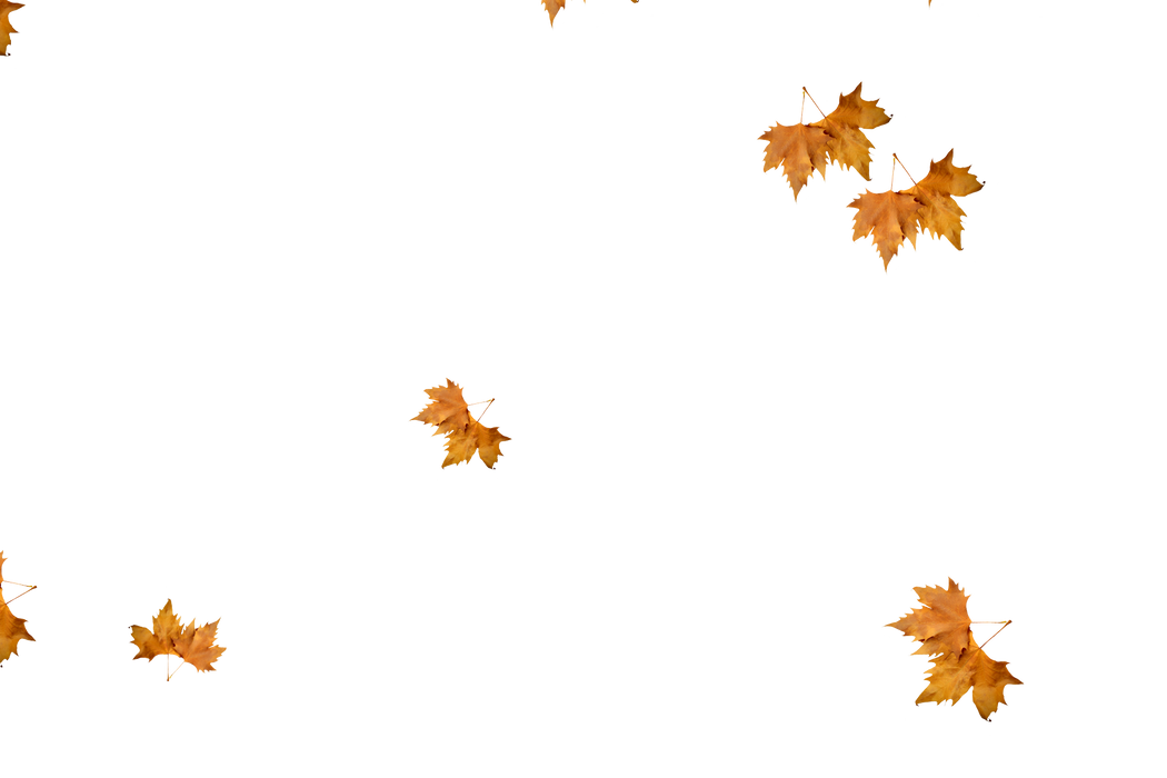 Falling leaves Photoshop overlays | Realistic autumn leaves transparent background