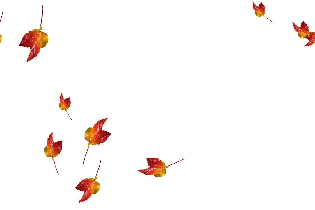 Falling leaves Photo Overlay | Beautiful autumn leaves transparent background