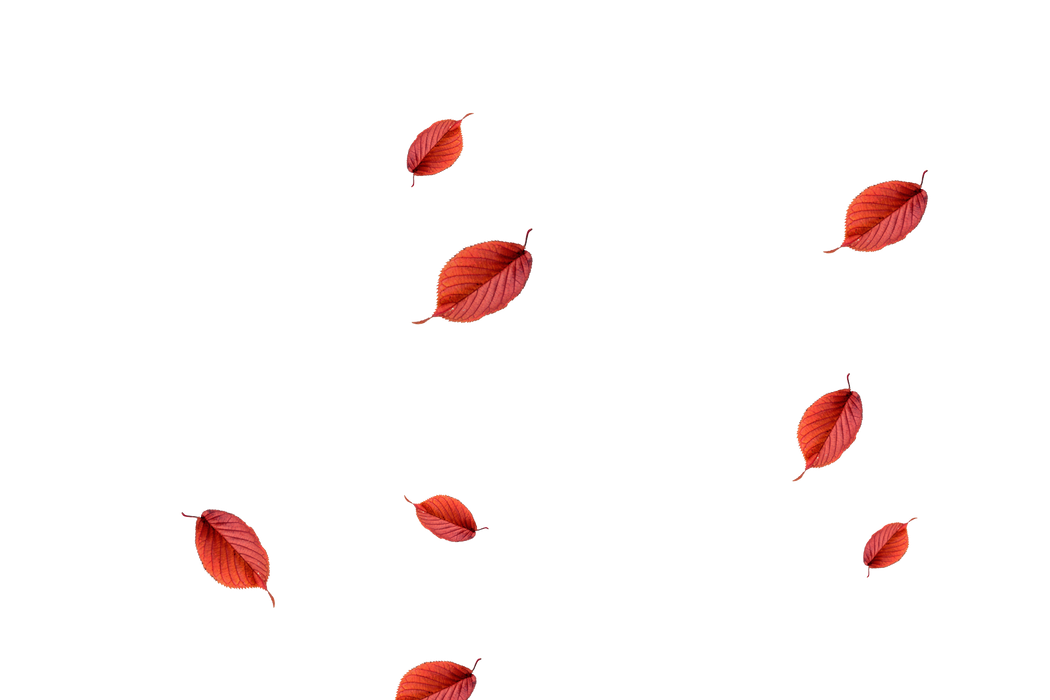 Awesome autumn leaves transparent background   Falling leaves Photoshop Overlay