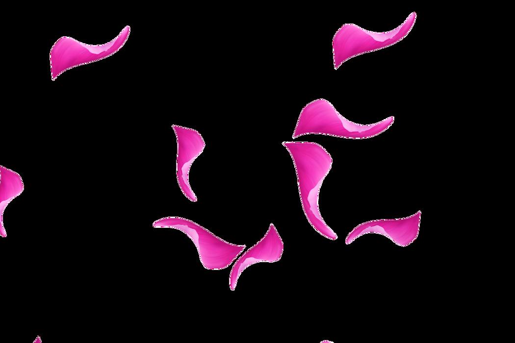 Glorious Falling Rose Petals | Photoshop overlays | Free