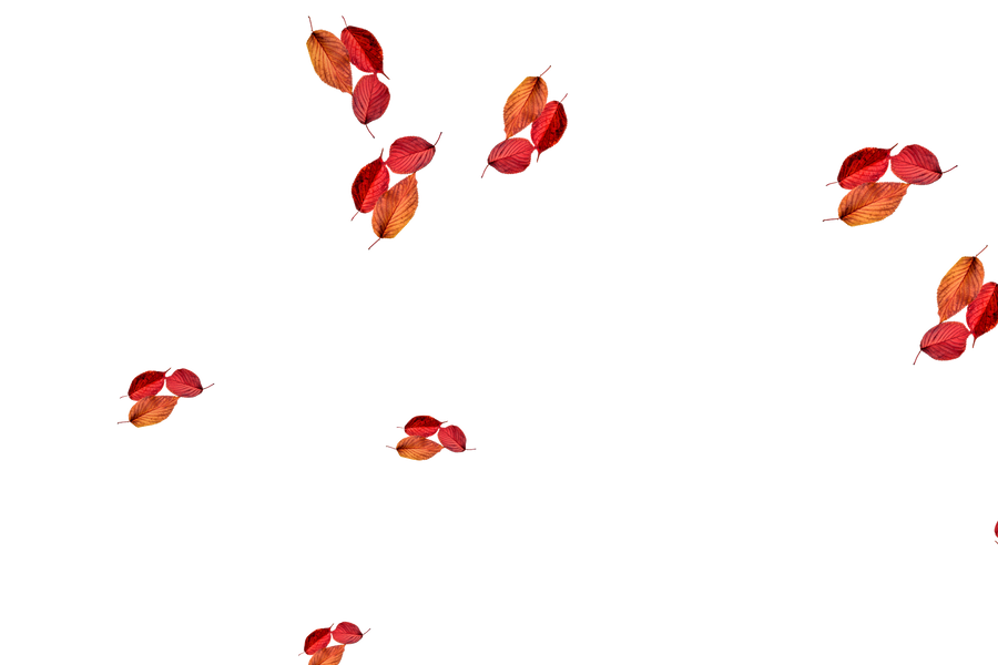 Falling leaves Photo Overlay | Dreamy autumn leaves transparent background