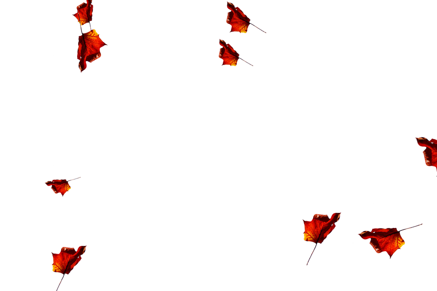 Falling leaves Overlay for Photoshop | Dreamy autumn leaves transparent background