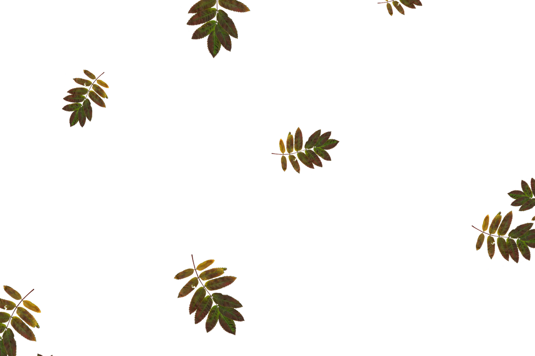 Superb autumn leaves transparent background | Falling leaves Photo Overlays