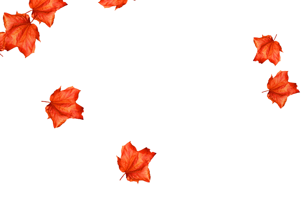 Stunning autumn leaves transparent background   Falling leaves Photoshop Overlay