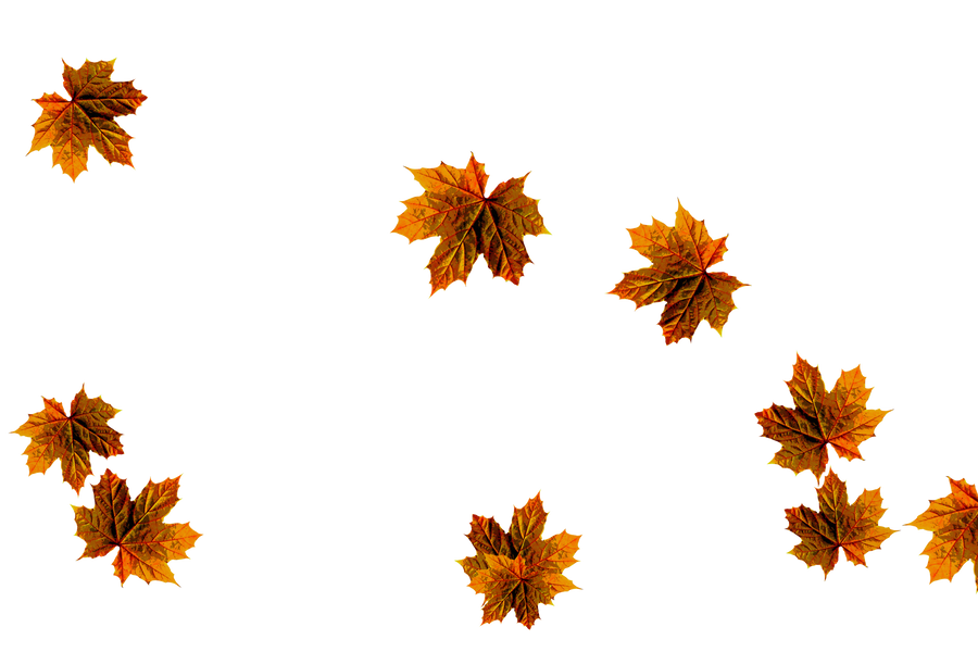 Dreamy autumn leaves transparent background | Falling leaves Photoshop overlays