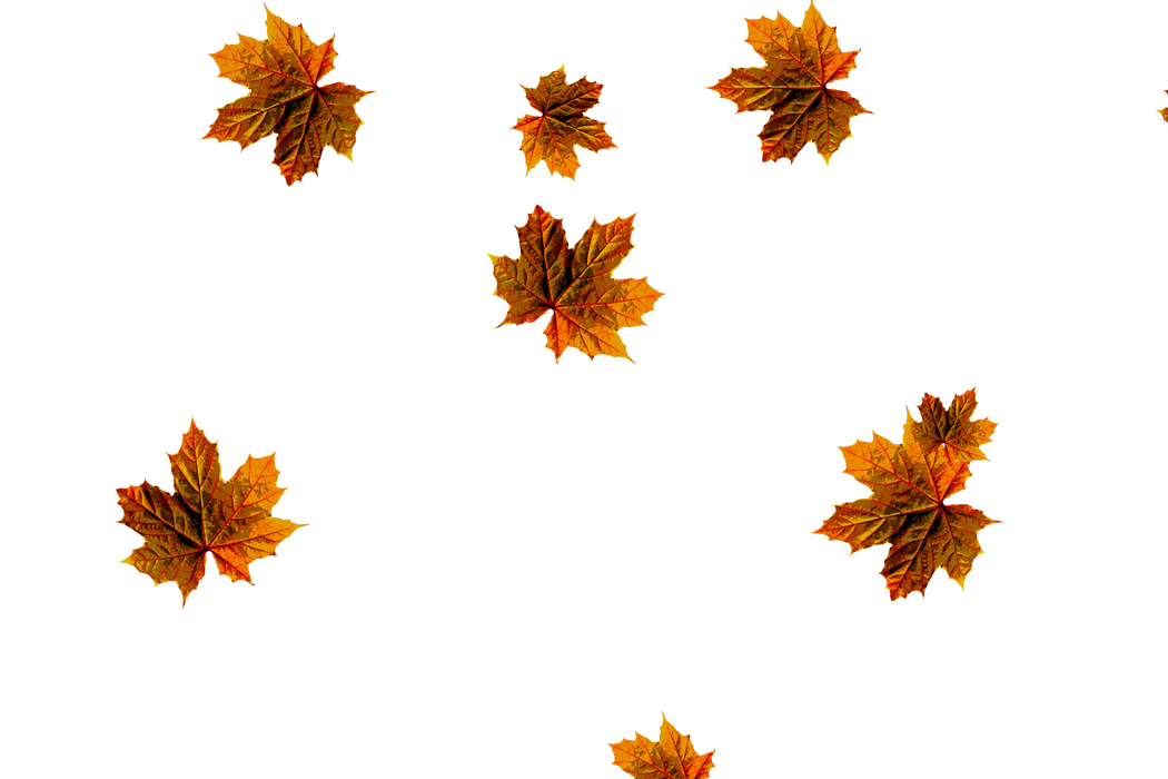 Falling leaves Overlays for Photoshop | Dreamy autumn leaves transparent background