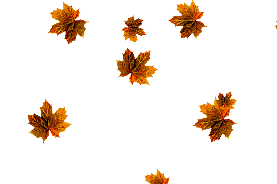 Falling leaves Overlays for Photoshop   Dreamy autumn leaves transparent background