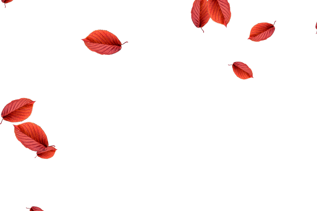 Glorious autumn leaves transparent background | Falling leaves Photo Overlay