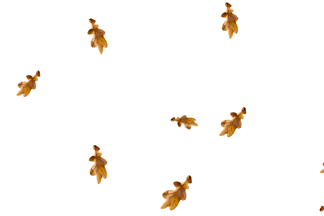 Unbelievable autumn leaves transparent background | Falling leaves Overlay for Photoshop