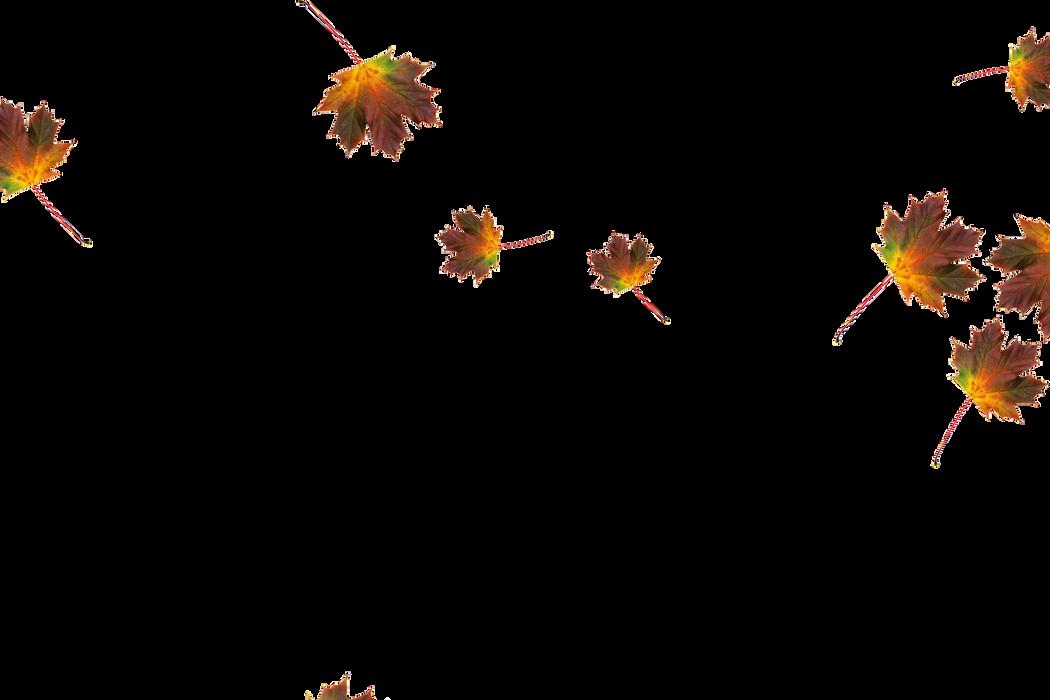 Falling leaves Photoshop overlays | Unbelievable autumn leaves transparent background