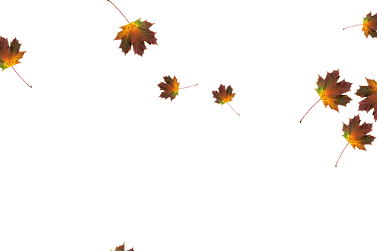 Falling leaves Photoshop overlays | Unbelievable autumn leaves transparent background