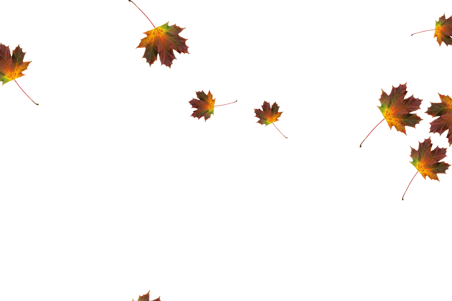 Falling leaves Photoshop overlays   Unbelievable autumn leaves transparent background