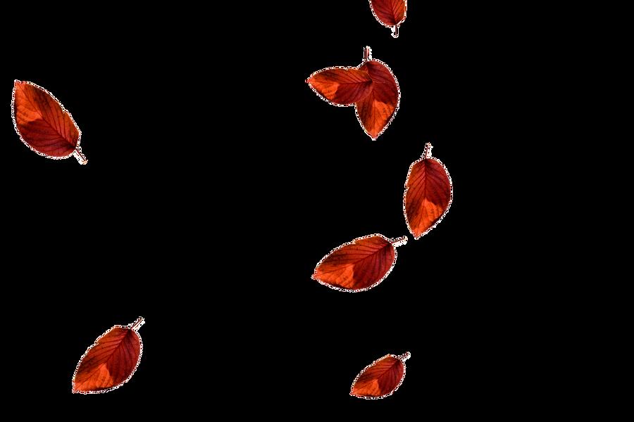 Falling leaves Photoshop overlays | Romantic autumn leaves transparent background
