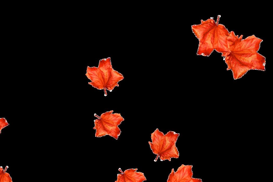 Falling leaves Overlays for Photoshop | Wonderful autumn leaves transparent background