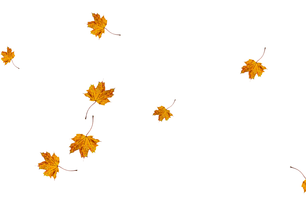 Realistic autumn leaves transparent background | Falling leaves Photo Overlays